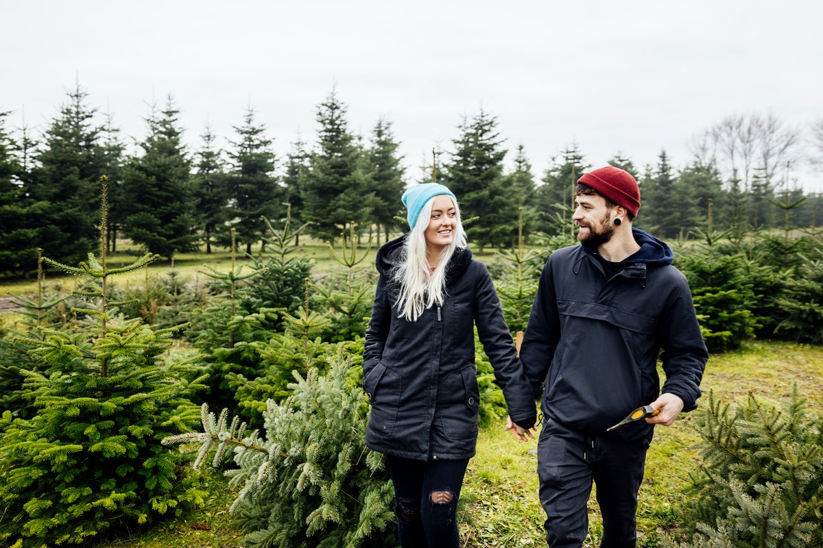 A young couple holds hands while walking through a Christmas tree farm.