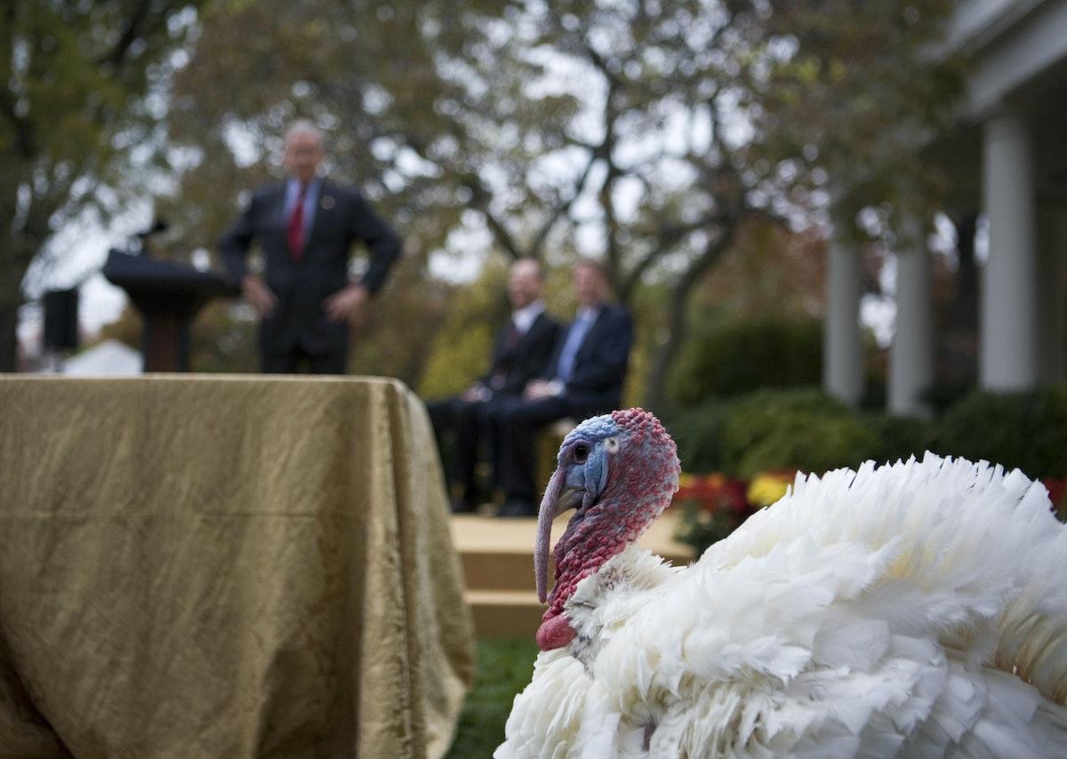 Presidential turkey pardon