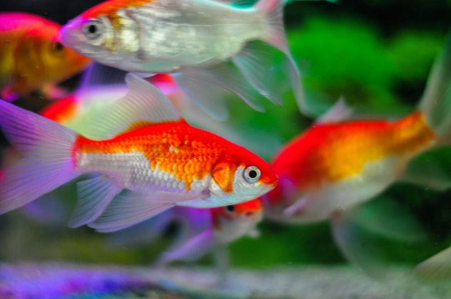 Dreams about fish can predict pregnancy.