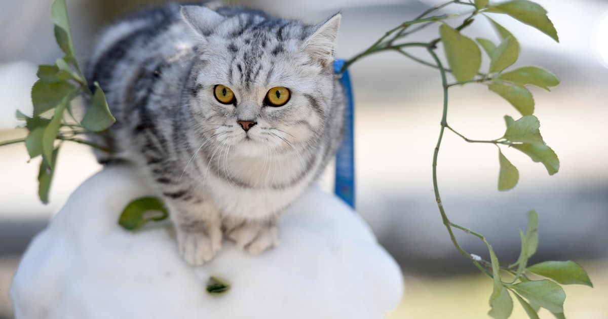 GPS trackers reveal one thing outdoor cat owners need to know
