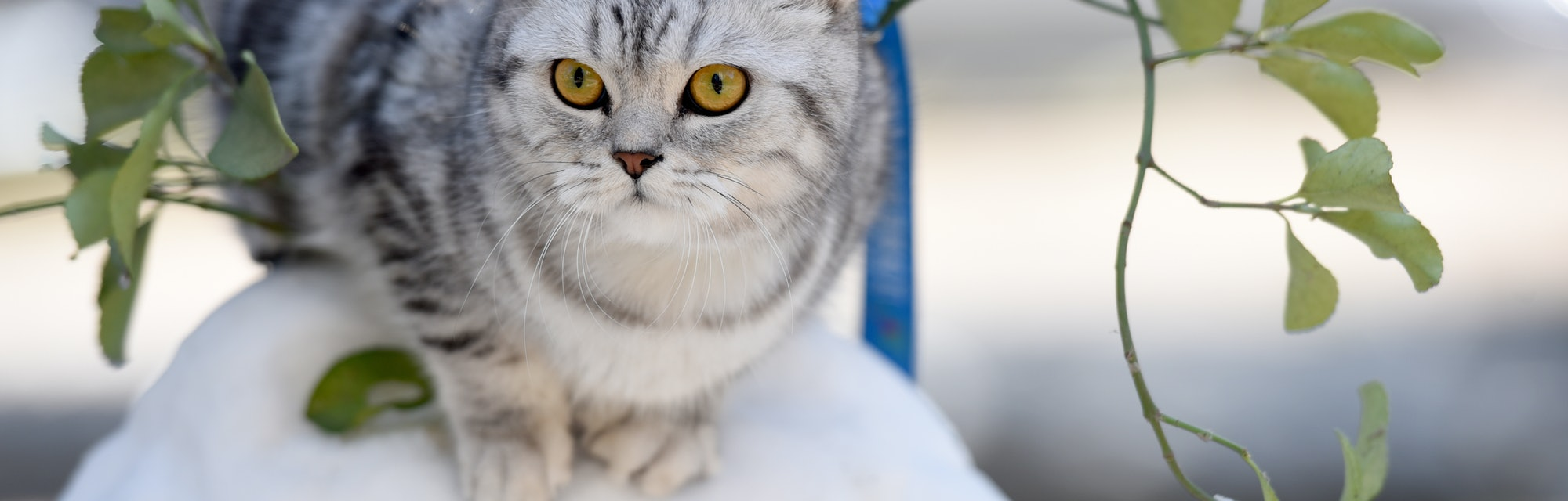 cat sitting outside on snow