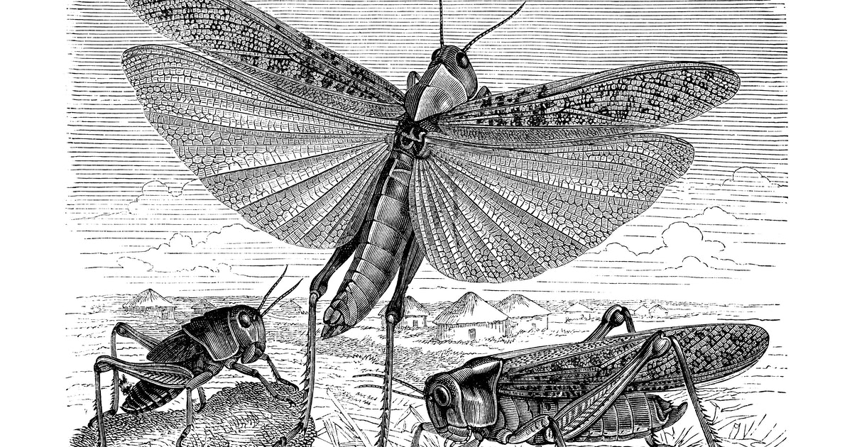 The mystery of how insects developed wings has finally been solved