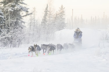 sled dogs pulling a sled in snow