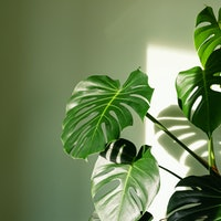 Which houseplants purify air? A 1989 NASA study has the answers