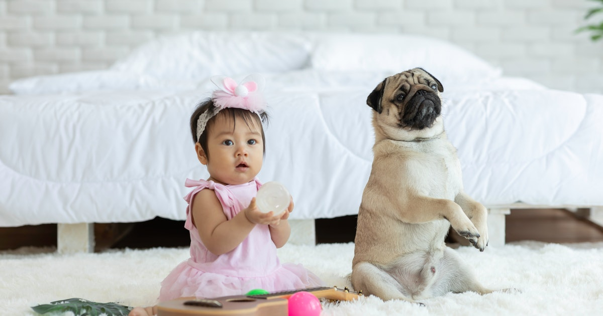 Whatever Babies, Everybody Knows You Stole These Fashion Trends From Dogs