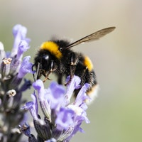 Bumblebees and humans share one key complex trait, new study suggests
