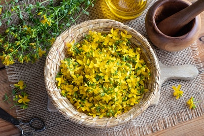 St John's wort flowers in a basket. St John's wort, or weed, flowers are ground up for use as an antidepressant.
