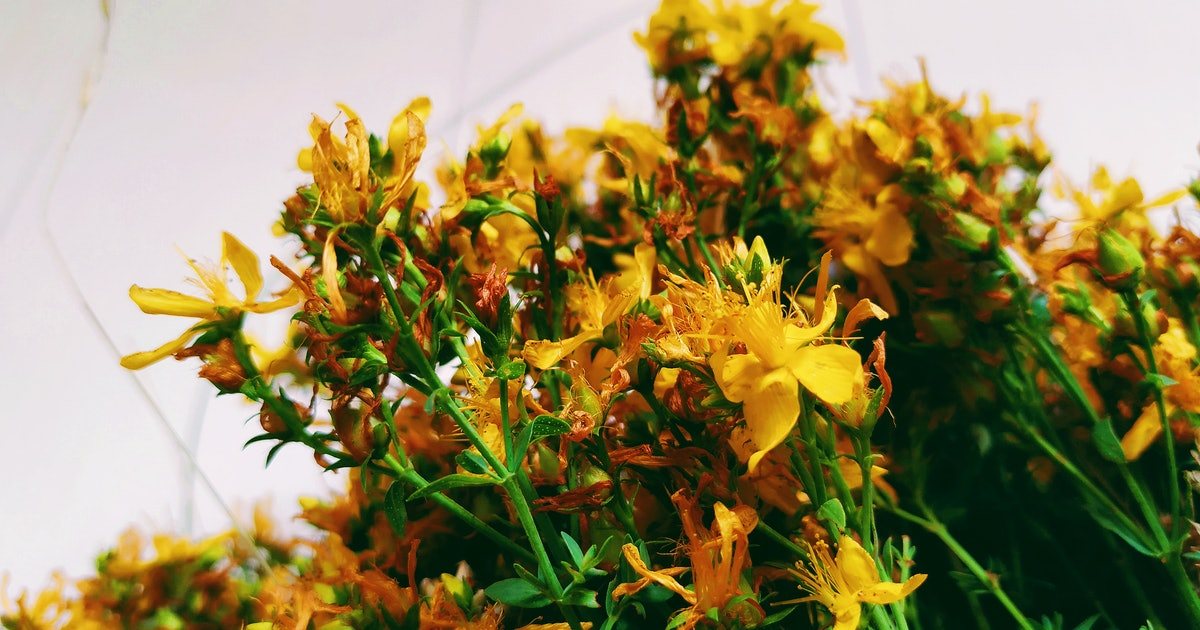 What Happens To Your Body When You Take St. John's Wort