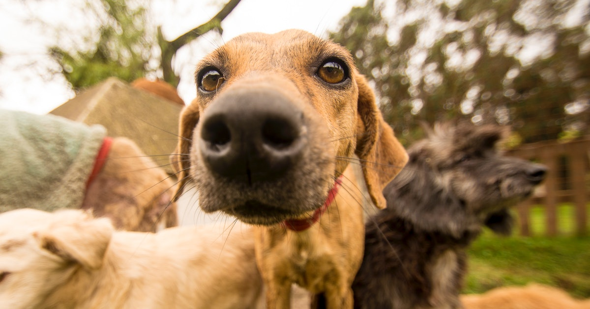 These 5 Breeds Of Rescue Dogs Are Known For Being Super Gentle & Sweet