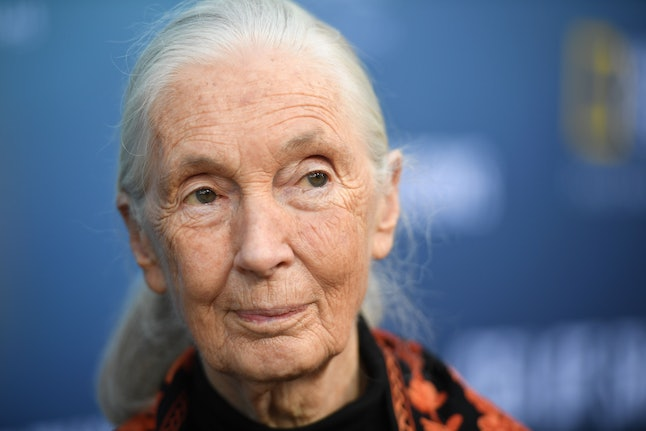 Jane Goodall is a renowned primatologist
