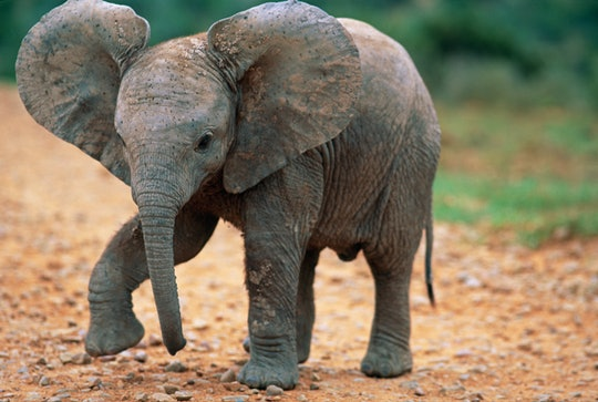 While the Cincinnati Zoo & Botanical Garden is closed, the zoo is offering home virtual safaris.
