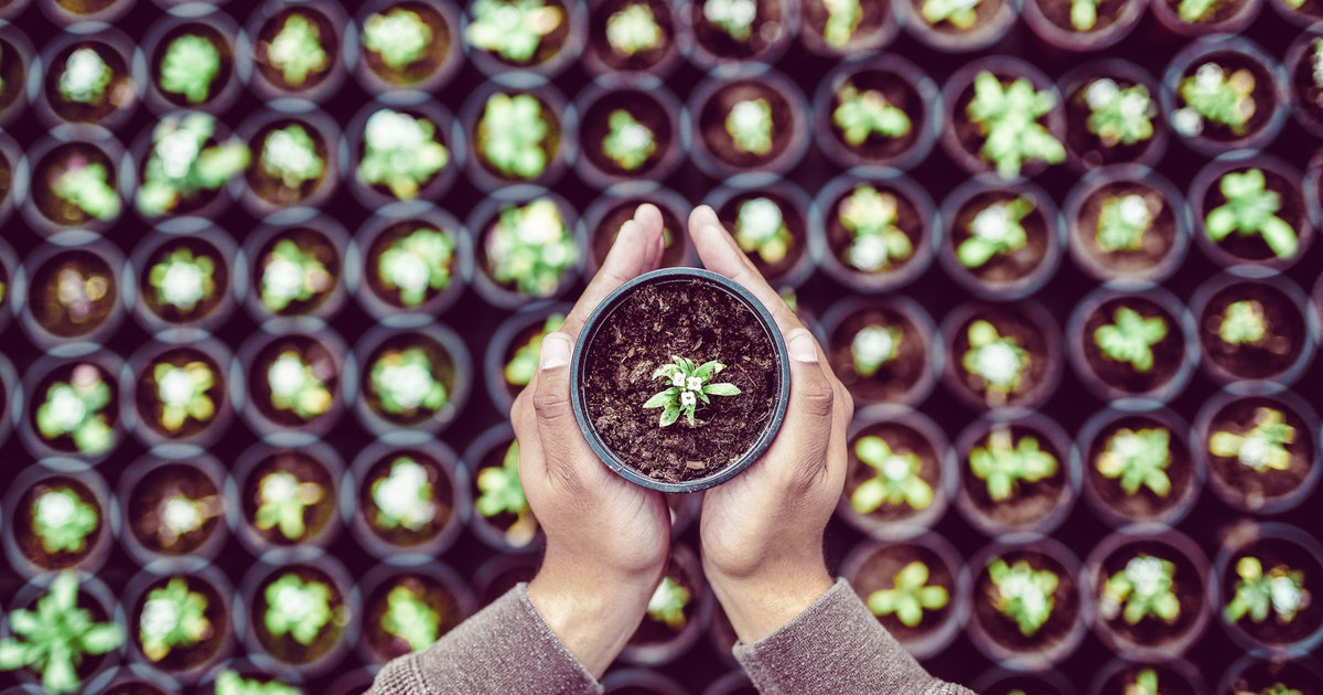 4 gardening activities you can do ... while self-isolating