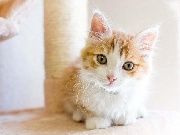 kitten tilting its head