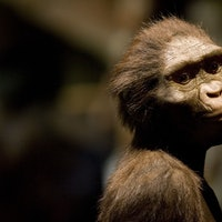3-million-year-old brains reveal ancient humans like Lucy had a surprisingly modern childhood