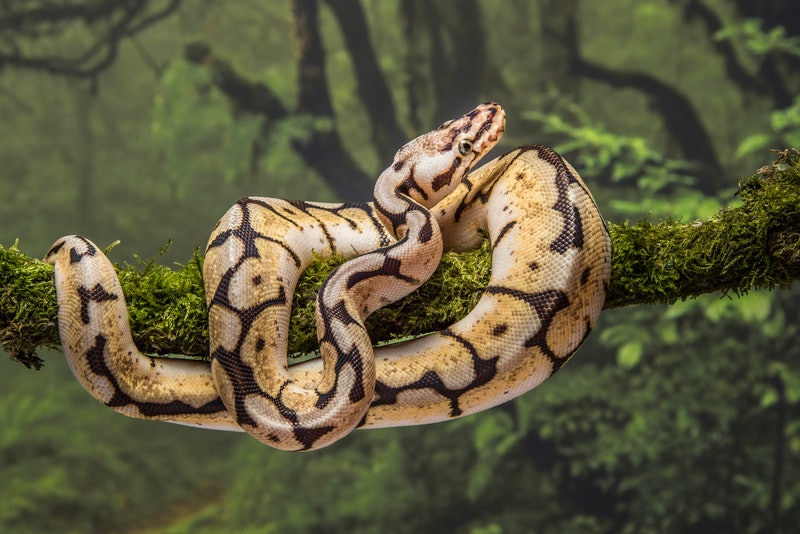 29 abandoned snakes were found in the U.K. including a dozen ball pythons and a dozen corn snakes.
