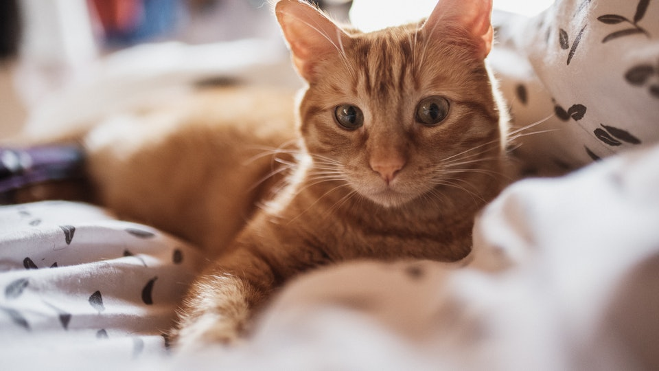 Household pets should practice social distancing amid coronavirus outbreak, according to new CDC guidelines.