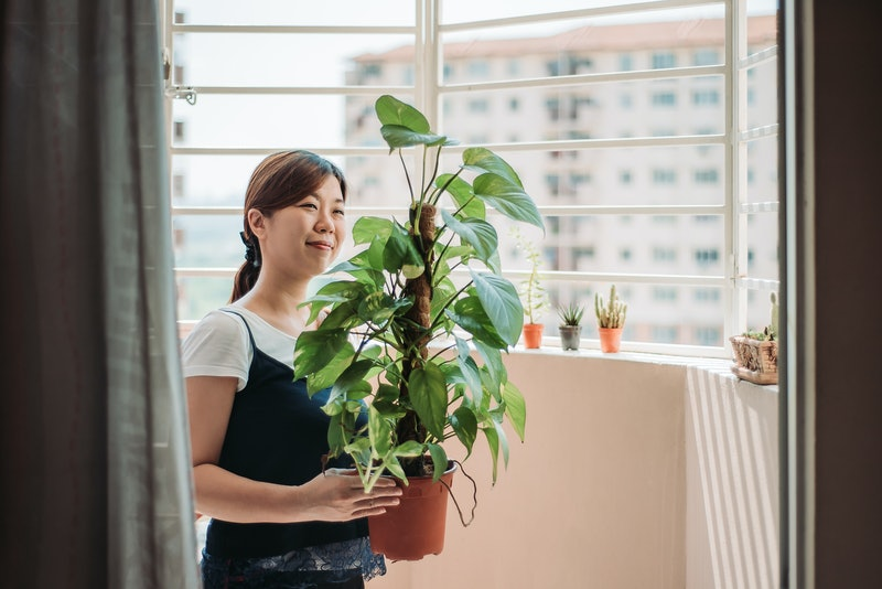 A person smiles as she carries her house plant from one place to another. House plants can be great for boosting your mental health, but make sure you're not accidentally hurting them by trying to give them extra love.