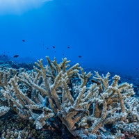 Photos: The dramatic race to save coral reefs from climate change