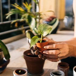 A woman plants seedlings in pots. Pregnancy symptoms, but not pregnant? These common symptoms of pregnancy might actually be something else, according to experts.