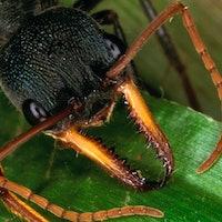"6 bugs more metal than the ""murder hornet"""