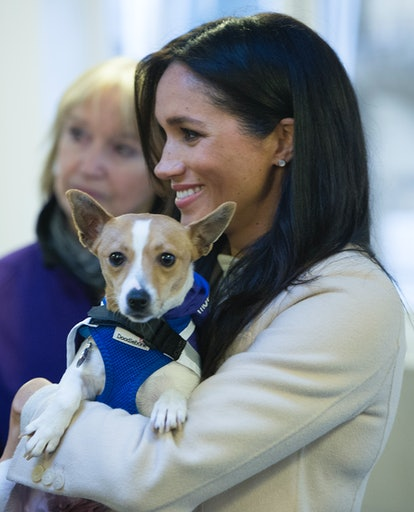 Meghan Markle renewed her dog kennel sponsorship in Archie's name.