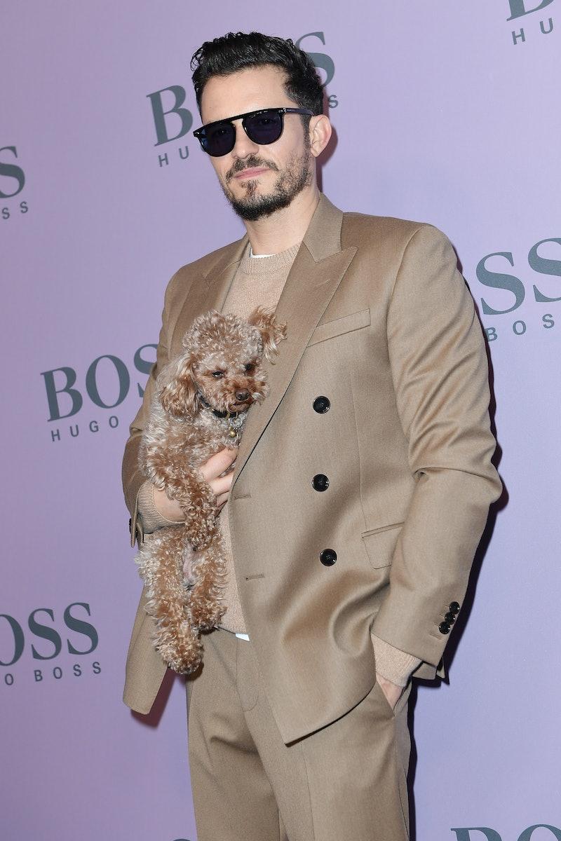 Orlando Bloom missing dog update