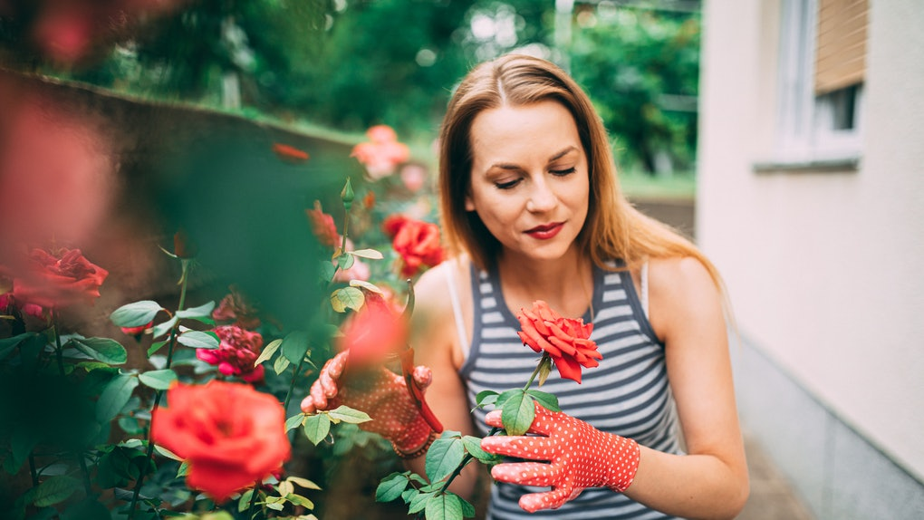A girl trims her roses in her home garden outside.