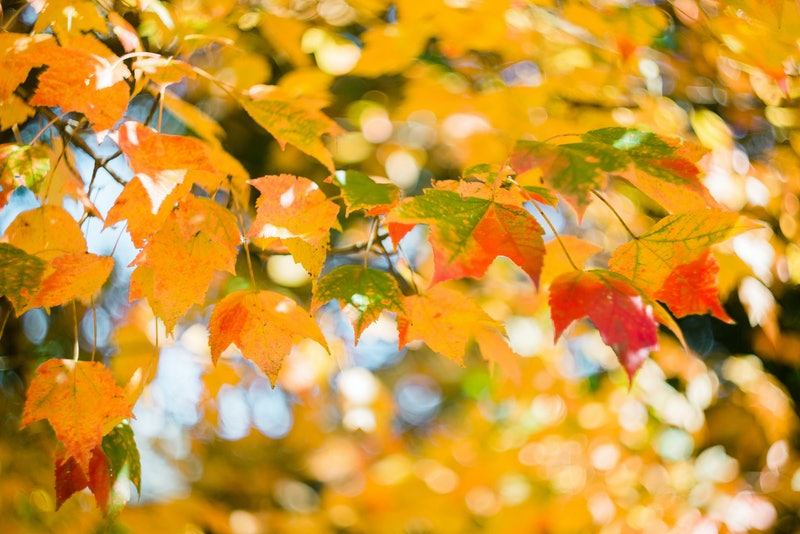 """Why Do We Call Autumn """"Fall""""? Turns Out, Both Terms Have A Lot Of Meaning  Behind Them"""