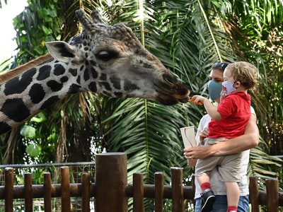 mom and baby boy at zoo seeing giraffe