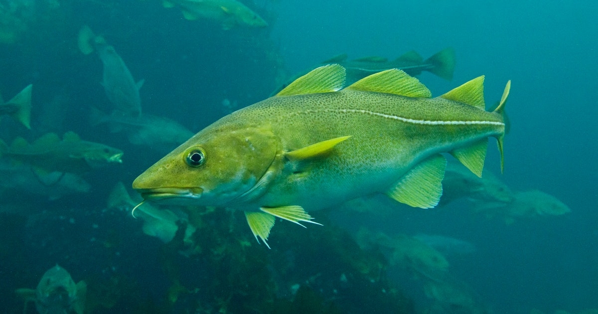60 percent of the fish we eat could face extinction thanks to climate change