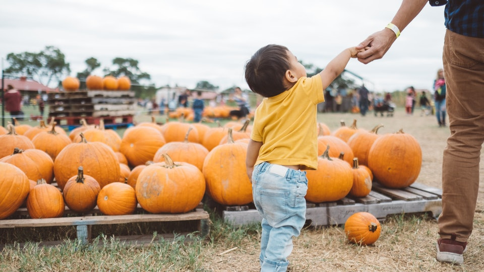 Experts say certain fall activities are safe when you follow guidelines like masks and social distancing.