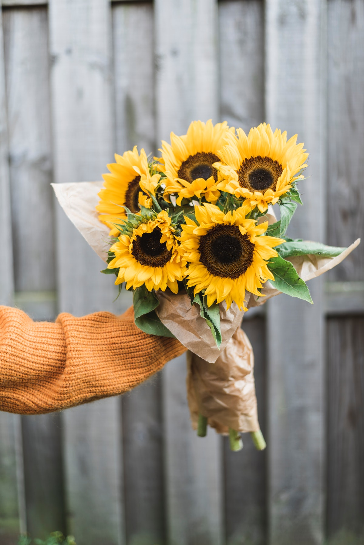 A young woman wearing an orange sweater holds up a bouquet of sunflowers in her backyard.
