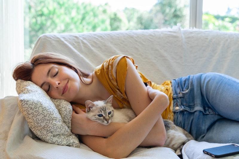 pet, cat, resting