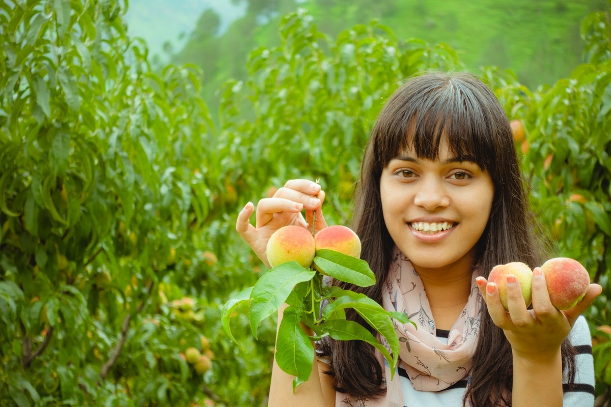 A woman holds peaches in her hands after picking them off the tree.