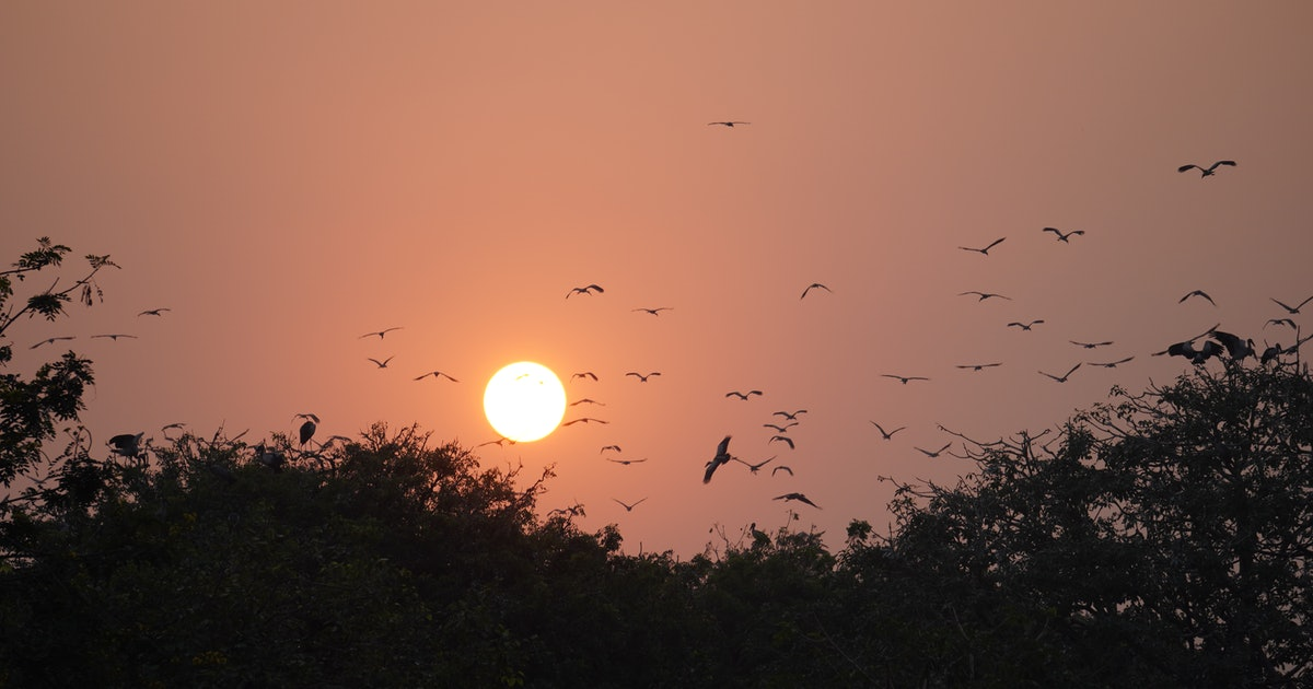 """As the planet warms, starving birds are falling from the sky in a """"mass die-off"""""""