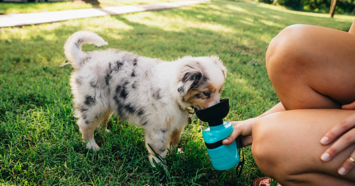 These Genius Water Bottles Make It *So* Easy To Keep Your Dog Hydrated On The Go