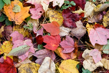 The autumnal equinox is typically associated with other aspect of the autumn season, like leaves changing colors.