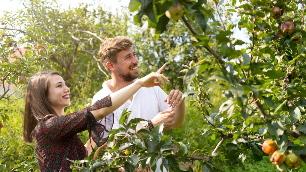 A happy couple points to an apple while in an apple orchard on a sunny fall day.