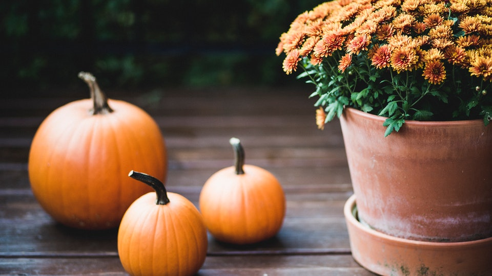 mums on a front porch with pumpkins