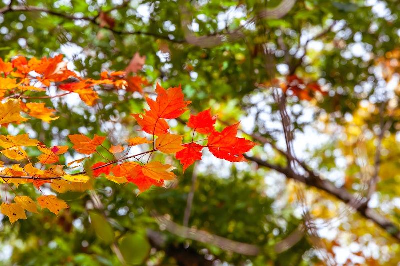 autumn, fall, foliage