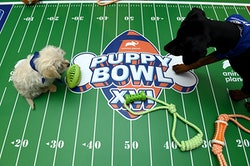 puppies at the puppy bowl