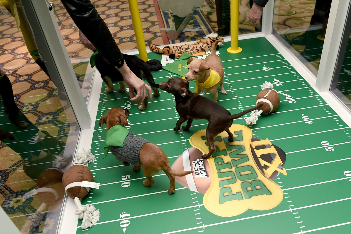 The Puppy Bowl is coming back so soon.