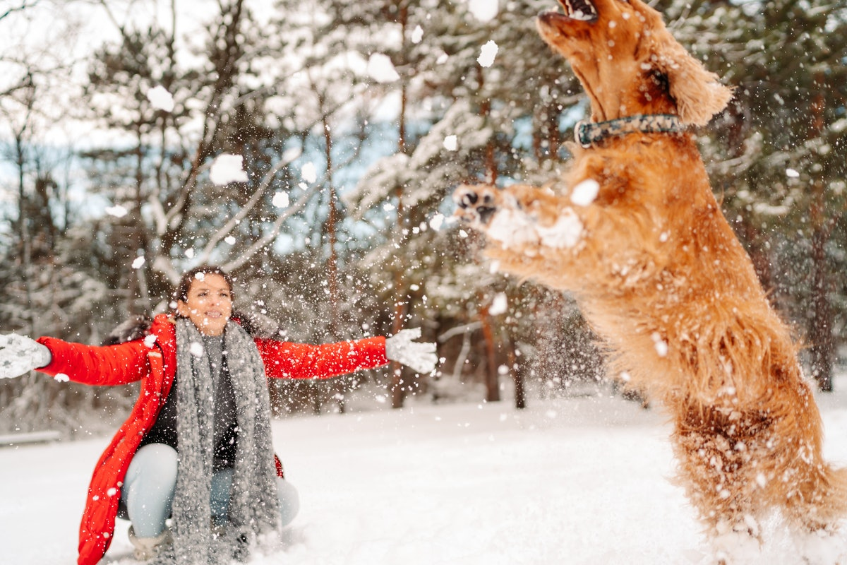 A bundled up woman and her dog play in the snow, while she throws snow balls.