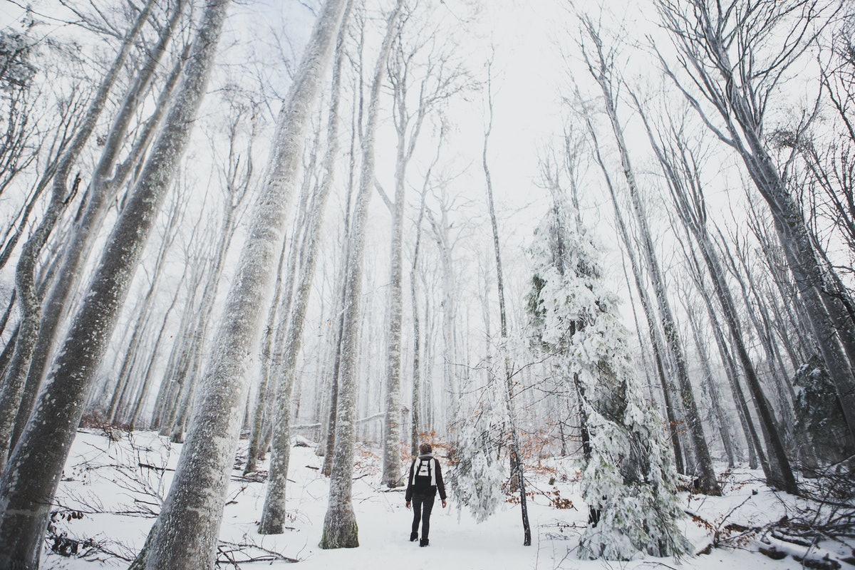 A young woman takes a winter hike in a forest with tall, snow-covered trees.
