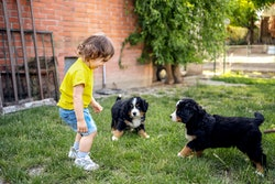 Jumping puppies can scare toddlers, but a little training can help.