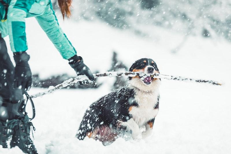 snow, winter, dog, pet