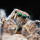 Macro photographs of arthropods like jumping spider ,grasshopper,hony bee,worm,insect,mosquito etc