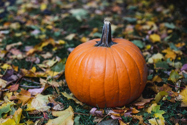 Here's how to dispose of pumpkins after Halloween.