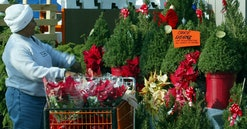 The rosemary bush has taken new life as a Christmas tree selling by the hundreds in the Los Angeles ...