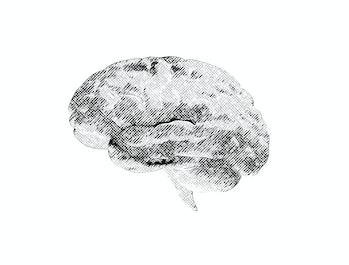Brain sketch, illustration.